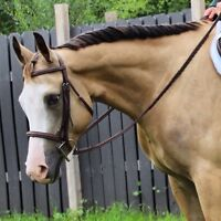 6 year old APHA gelding for sale