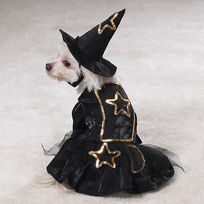 Easy Halloween Dog Costumes (LIL' WITCH Dog Costume Hat Gold Trim Easy On/Off Hook Loop Closures Halloween)