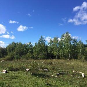 Terre à bois de 97 acres en Abitibi pour chasse