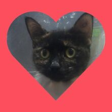 Adopt your one true Furrrever Love this Valentines Day!!! Victoria Point Redland Area Preview
