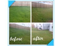 Grass cutting/hedges/tree removal services and gardening maintenance