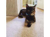 5-6 months female cat