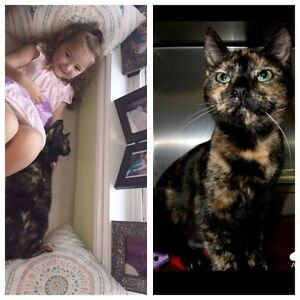 Please Help Bring Our Kitty Home!!!!