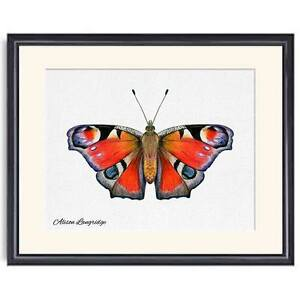 A4 Peacock Butterfly Watercolour Painting Signed Limited Edition Print