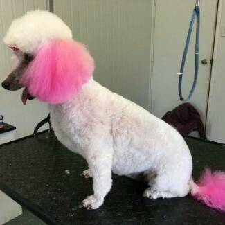 Dog grooming salon in queensland gumtree australia free local dog grooming solutioingenieria Choice Image
