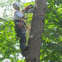 TREE REMOVAL, TRIMMING & PRUNING SERVICES - LOWEST Prices!