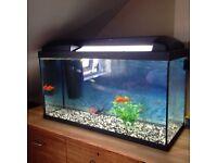 big 80 litre tank aquarium