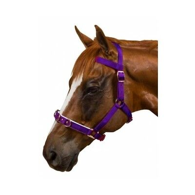 Nylon Cavesson - Kincade Nylon Padded Lunge Cavesson Purple