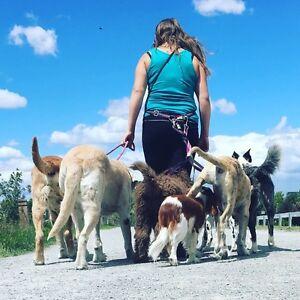Doggie Dayhome - 24/7 dog care