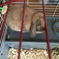 Free bunny to a good home