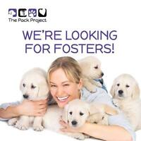 Do you love dogs? We are looking for foster homes