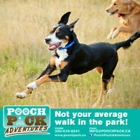 Nanaimo's Leader In Off-Leash Pack Hikes, Pooch Pack Adventures!