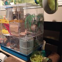 BUILT HAMSTER CAGE!