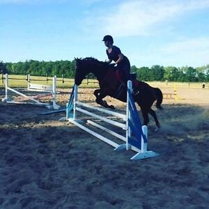 Tb gelding for part board