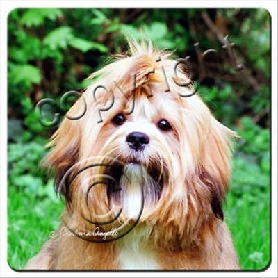 Lhasa Apso Brown Dog Rubber Backed Coasters Set of 4
