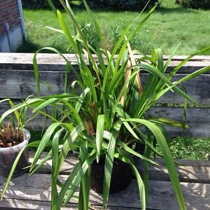 Orchid Plants for Sale London Ontario image 7