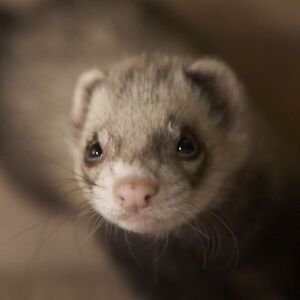 Yard Sale to Support FERRET Aid!!!
