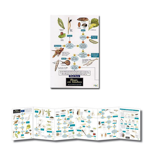 Bugs on Bushes Laminated Identification Chart Field Guide Poster