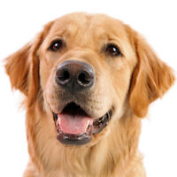 Bark Busters In-home Dog Training