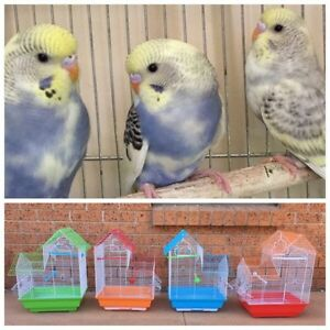 Beautiful baby budgies : New cages & stands Kellyville The Hills District Preview