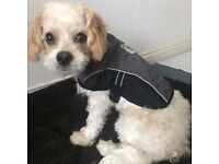 Small Dog / Puppy Rain Coat FREE