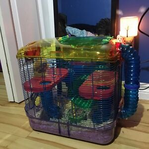 Hamster and 3 level cage