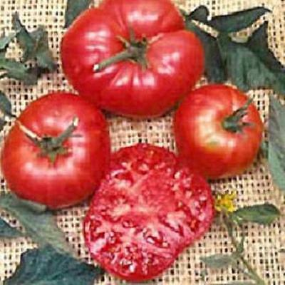 (Brandywine Red Potato Leaf Tomato Seed  )
