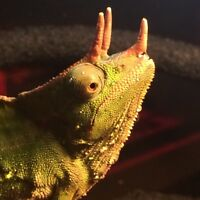 Reptiles for sale! Check out our list!