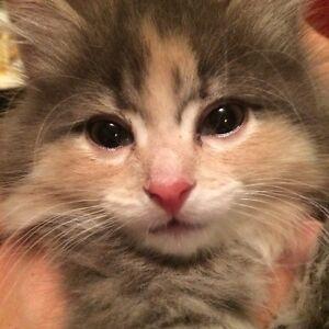 Chaton très mignonne