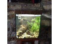 Aqua one fish tank 26 litres