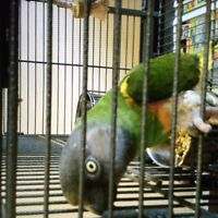 Parrot. With large cage and food and all toys