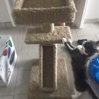 Cat tree and supplies