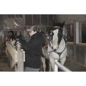 English riding lessons and training