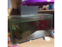 Fish tank starter