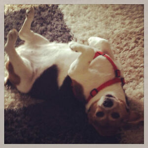Pet Sitting, Dog Walking and Pet taxi available - KW area Kitchener / Waterloo Kitchener Area image 1