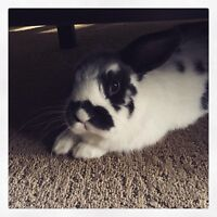 Gentle, Happy & Playful Bunny (Peachland)