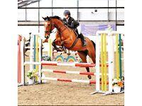 Horse share 2/3 days per week in Edinburgh