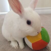 WHITE HOUSE BUNNY FOR FREE PLEASE CONTACT