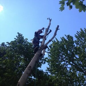 Tree Service  Peterborough Peterborough Area image 5