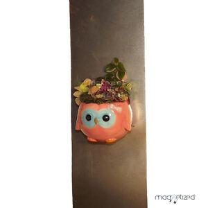 cache pot magn tique 8cm hiboux rose cache pot magnets aimant d co plantes ebay. Black Bedroom Furniture Sets. Home Design Ideas