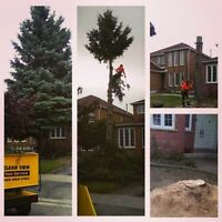 Tree and Stump Removal ,Trimming # 905 252 3151