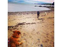 Dog walker and pet sitter