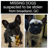 Dogs stolen from quebec border