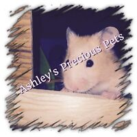 Pure bred and Various hamsters for sale to good homes only