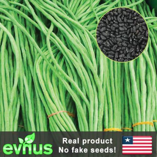 50pc Yard Long Cowpea Bean Seeds Heirloom Non-GMO Variety Chinese Long Bean