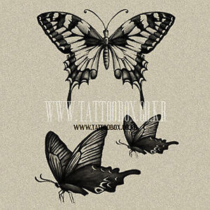 Temporary-Tattoo-Butterfly-TFTIN008