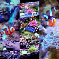 Beautiful Saltwater Aquariums, Top Q. Complete and Ready to Go!