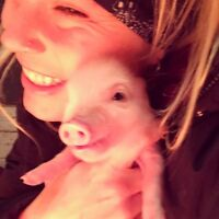 Micro piglets looking for a good home!