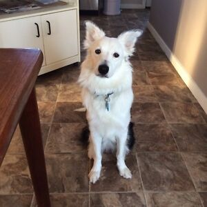Pet Friendly Roomy Wanted