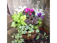 Autumn/Winter Barrel Planter